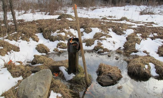 An abandoned well from the early 1900's spews oil into the Tamarack Swamp.