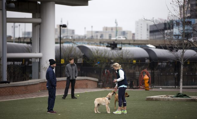 In this photo taken April 9, 2015, people play with their dogs in view of train tank cars with placards indicating petroleum crude oil standing idle on the tracks, in Philadelphia.
