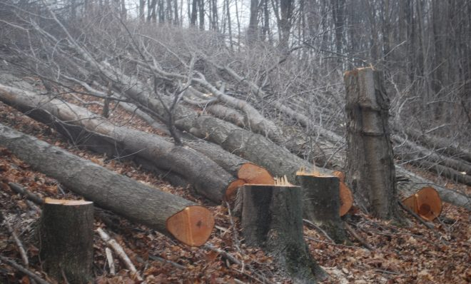 Trees cut on a Susquehanna County property in March 2016 to make way for the proposed Constitution Pipeline. The company has said it will fight a FERC order upholding New York State's denial of a permit for the project.