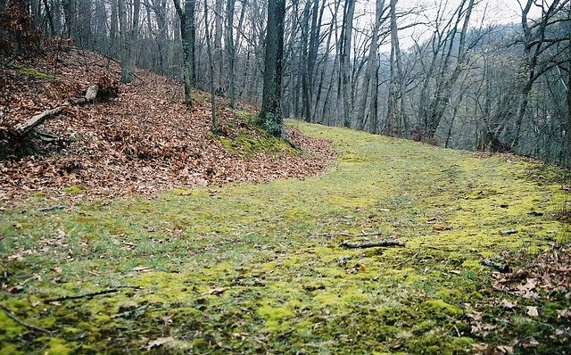 A trail in Ryerson Station State Park, managed by the DCNR whose leasing of state lands for oil and gas development is at issue in a new court challenge by an environmental group.