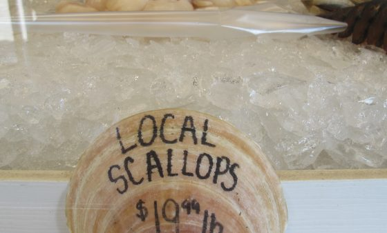 Scallops for sale at the Fisherman's Coop in Point Pleasant, NJ. Scientists say even small oil leaks, or chemical spills from offshore drilling could impact the fishery.