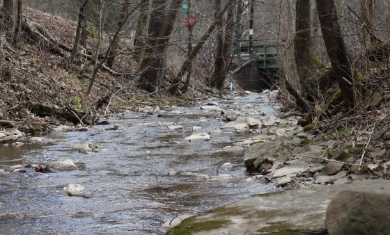 Polen Run in Ryerson Station State Park, Greene County. Photo: Center for Coalfield Justice
