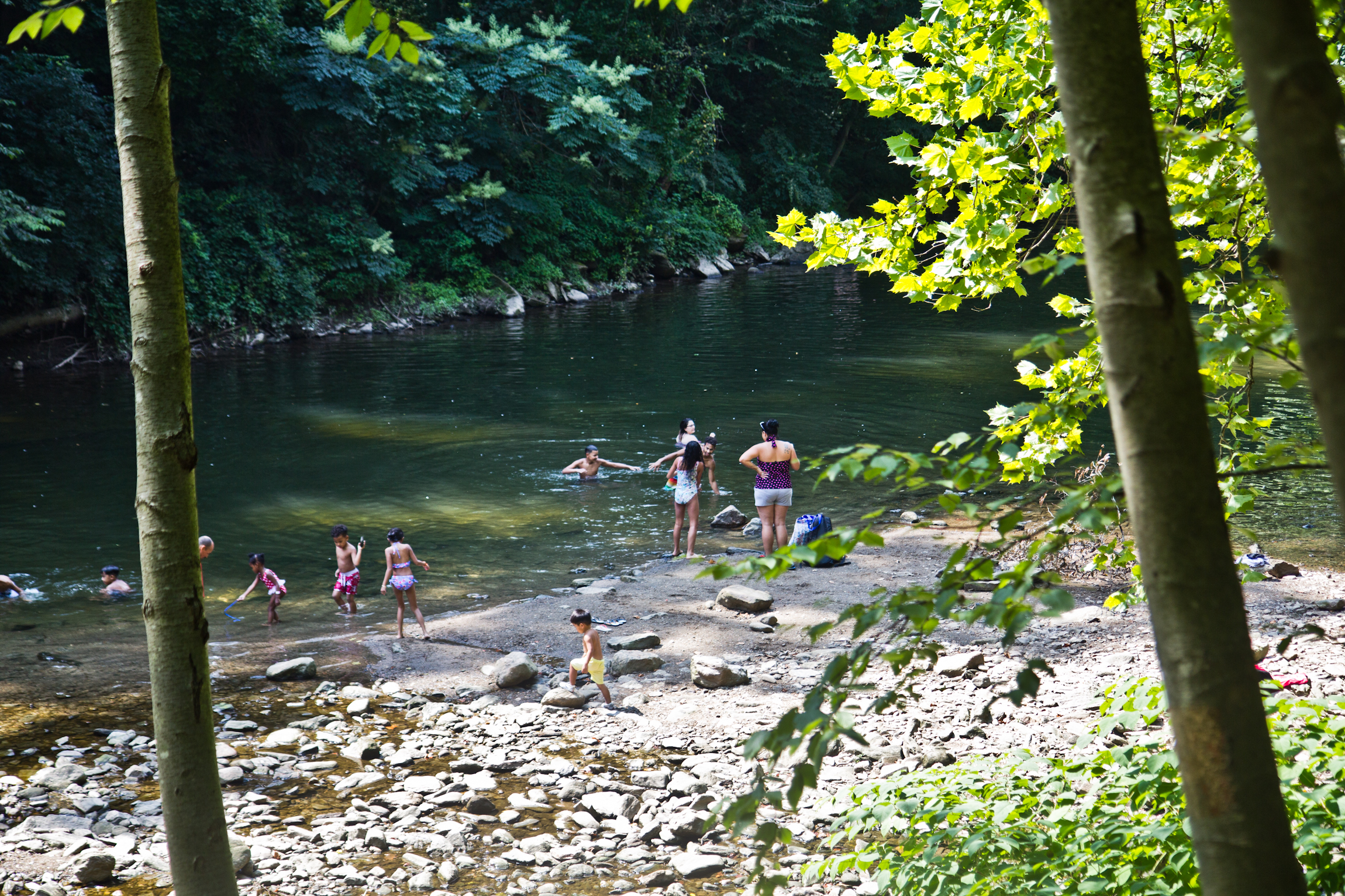 Swimming in the Wissahickon isn't so idyllic: There's poop