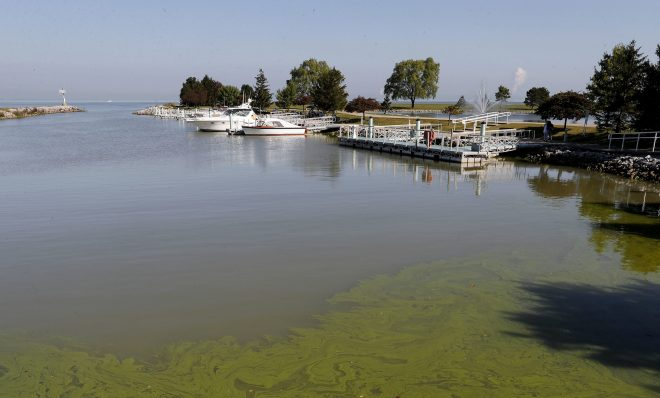 FILE - In this Sept. 15, 2017, file photo, algae floats in the water at the Maumee Bay State Park marina in Lake Erie in Oregon, Ohio.