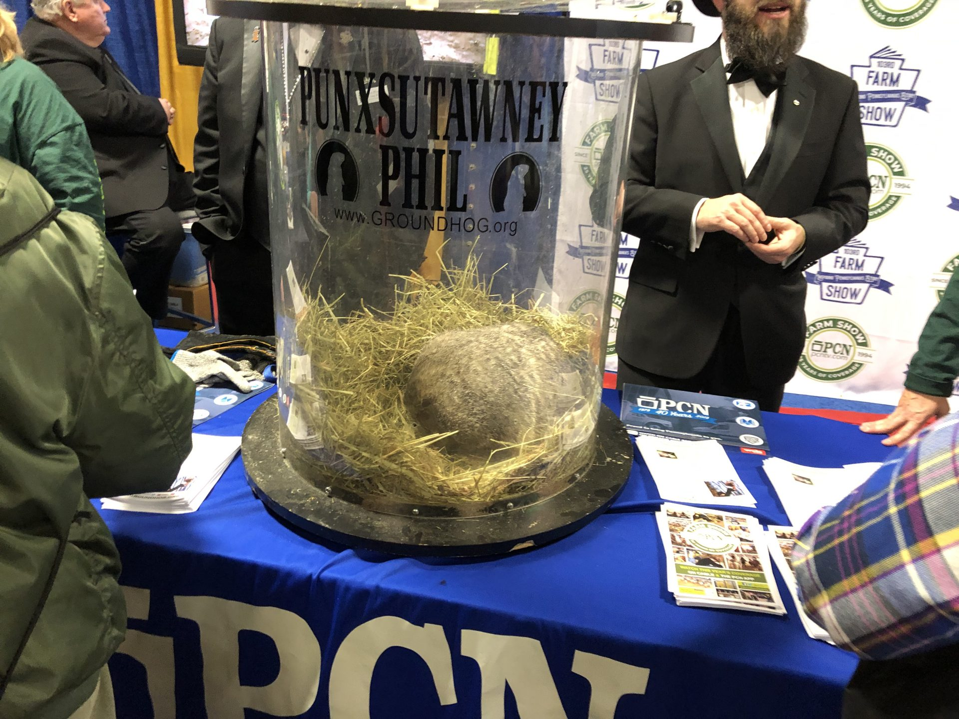 Punxsutawney Phil is seen at the Pennsylvania Farm Show Complex in Harrisburg on Jan. 8, 2019.
