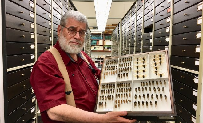 Robert Davidson, collection manager for the section of invertebrate zoology at the Carnegie Museum of Natural History, shows specimens of Brood VIII cicadas that emerged in 2002 -- the last time these 17-year cicadas were seen.