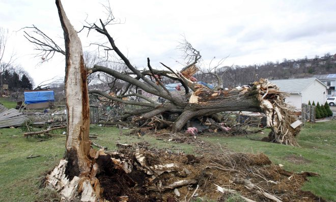 A large tree lays uprooted past the hole where it came from in a yard as people continue cleanup efforts, Thursday, March 24, 2011 in Hempfield, Pa. Severe storms went through the Westmoreland County area on Wednesday March 23, 2011,  causing severe damage. The National Weather Service has confirmed that a tornado was responsible for destroying 30 homes and badly damaging about 60 more in western Pennsylvania.