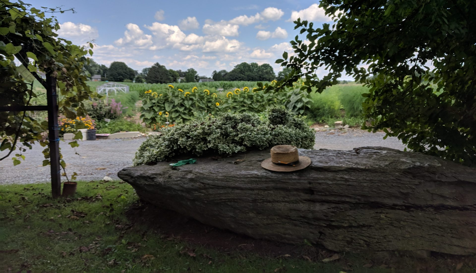 An Amish man's hat rests on a rock outside a farmhouse in Leacock Township, Lancaster County, on July 24, 2019.
