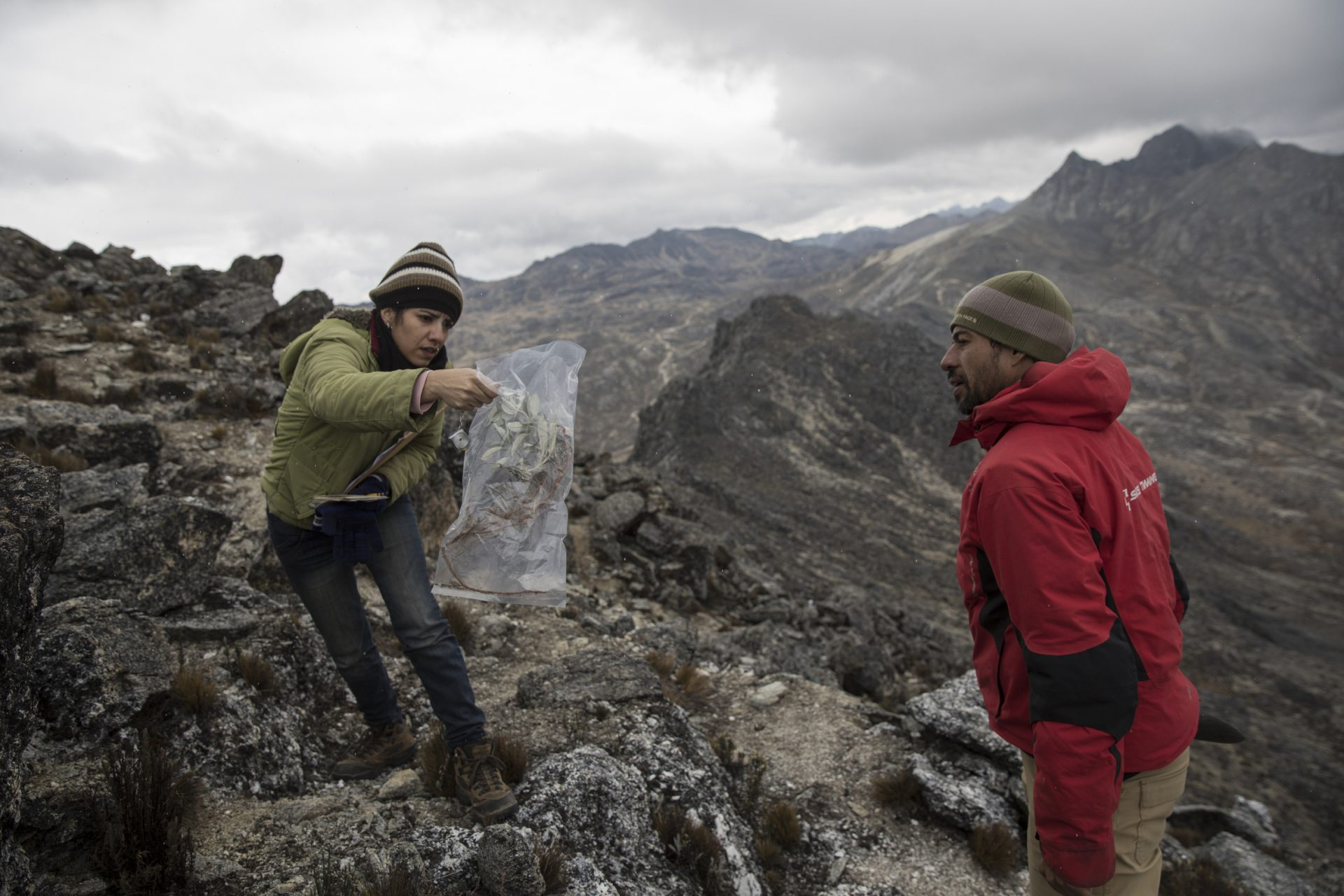 In this Feb. 19, 2019 photo, scientist Johanna Bracho shows Eloy Torres a plant sample during a mission to study the Andean ecosystem known as the paramos — a mist-covered mountain grassland that lies between the top of the treeline and the bottom of the Humboldt glacier, in Merida, Venezuela.