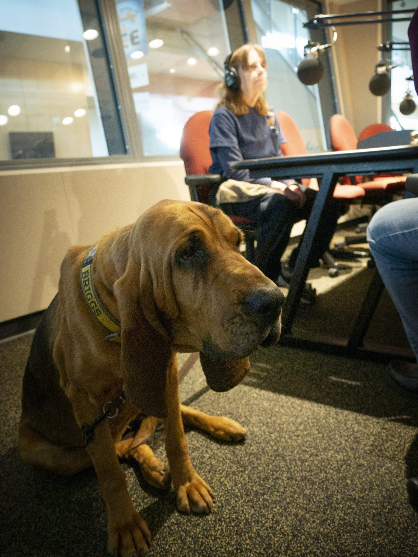 Detective K9 Briggs and Terri Heck appear on Smart Talk on January 24, 2020.
