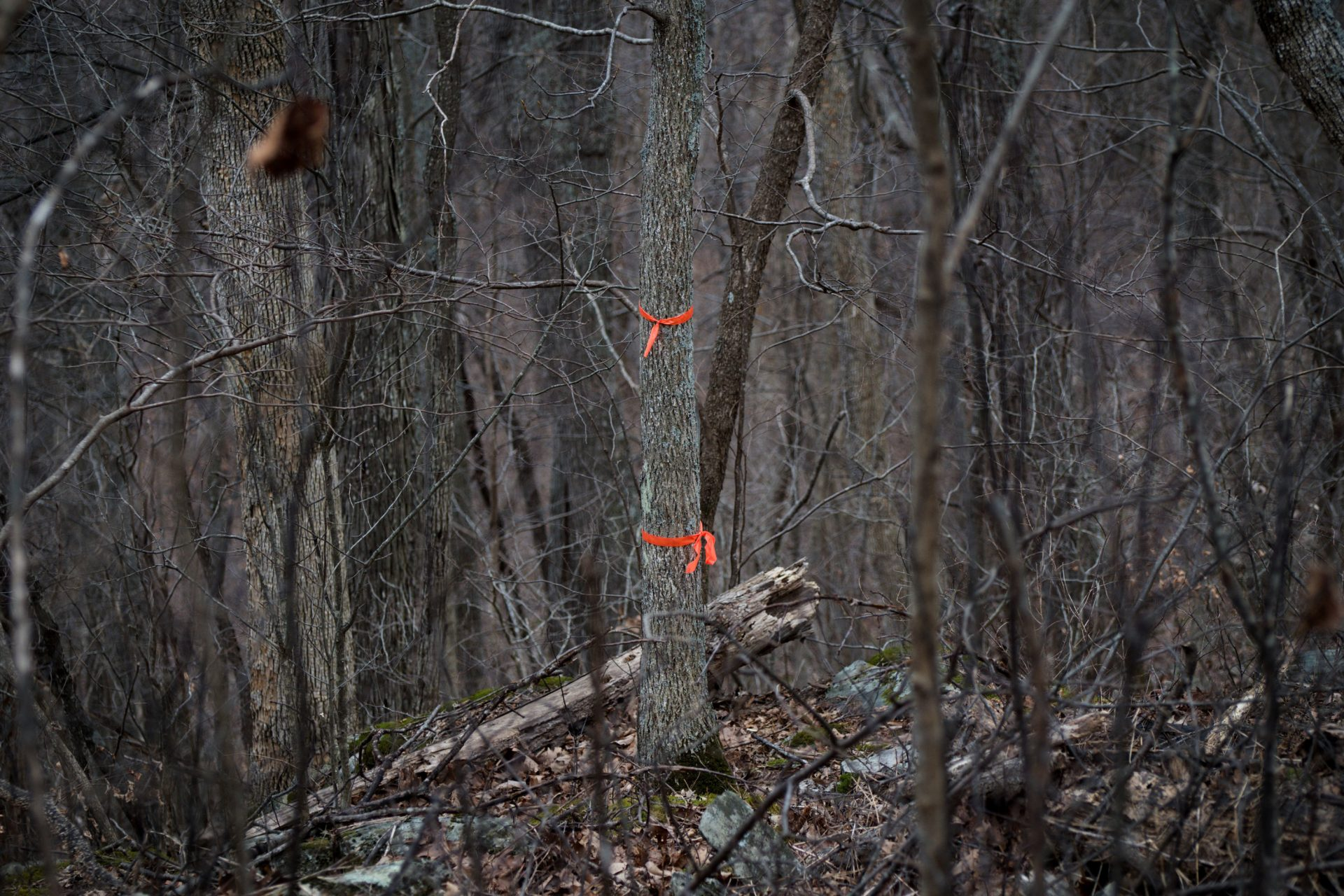 Orange flags near the trail mark the approximate crossing location of the pipeline, which would be tunneled hundreds of feet below ground.
