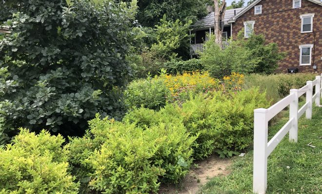 """Coneflowers and trees grow in the rain garden on the corner of Bailey and North 13th streets in Summit Terrace. """"These were little babies when we were doing this,"""" said Rafiyqa Muhammad, who helped create the garden. """"Everything has grown."""""""