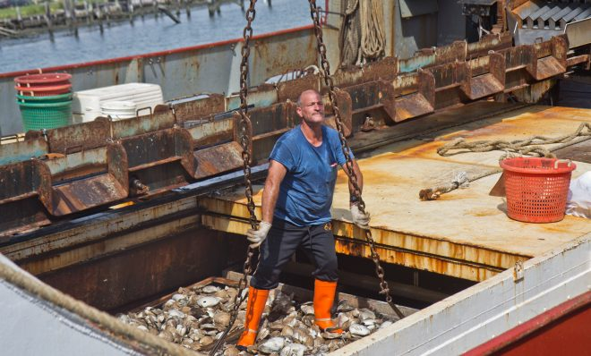 A fisherman attaches large chains to 2000 pound crates of Atlantic surf clams from the Christy at Dockside Packing in Atlantic City, N.J.